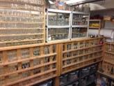 KP shelves of glasses