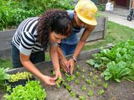 Tremont Urban Learning Garden
